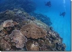 okinawa kerama diving768