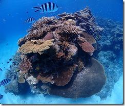 okinawa kerama diving771