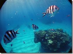okinawa kerama diving772