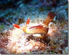 okinawa kerama diving776