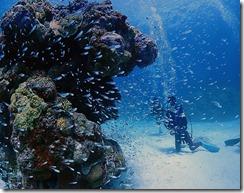 okinawa kerama diving779