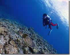 okinawa kerama diving780