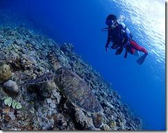 okinawa kerama diving781