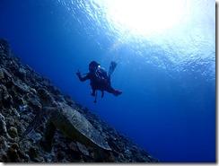 okinawa kerama diving782