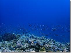 okinawa kerama diving784