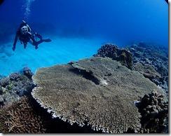 okinawa kerama diving790