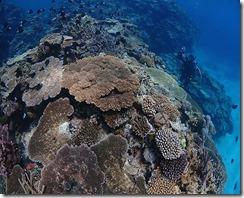 okinawa kerama diving791