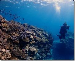 okinawa kerama diving792
