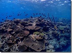 okinawa kerama diving793