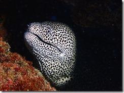 okinawa kerama diving794