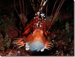 okinawa kerama diving795