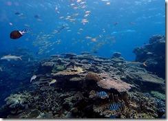 okinawa kerama diving799