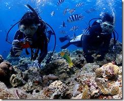 okinawa kerama diving804