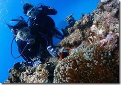 okinawa kerama diving805