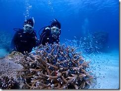 okinawa kerama diving806