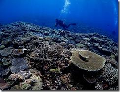 okinawa kerama diving808