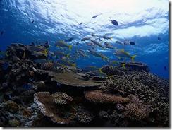 okinawa kerama diving814