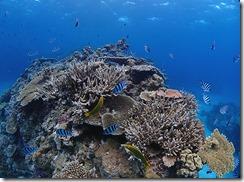 okinawa kerama diving815