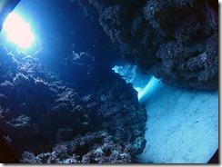 okinawa kerama diving816