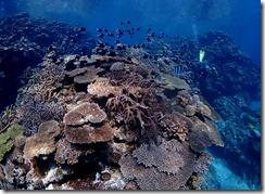 okinawa kerama diving821
