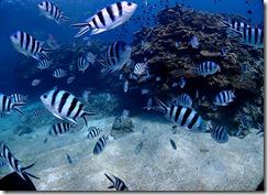 okinawa kerama diving822