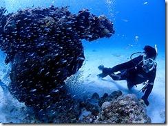 okinawa kerama diving824