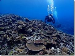 okinawa kerama diving831