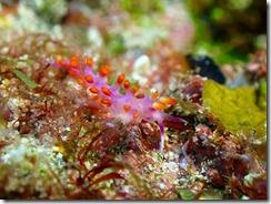 okinawa kerama diving834