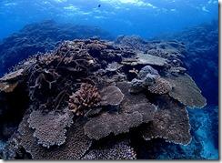 okinawa kerama diving835