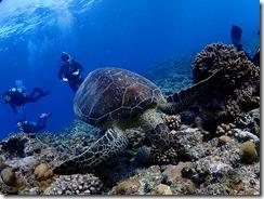 okinawa kerama diving847
