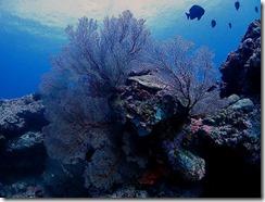 okinawa kerama diving848