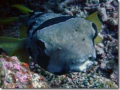 okinawa kerama diving851