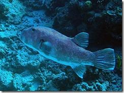 okinawa kerama diving852