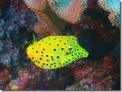 okinawa kerama diving853
