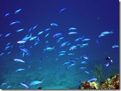 okinawa kerama diving854
