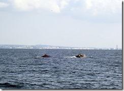 okinawa kerama diving855