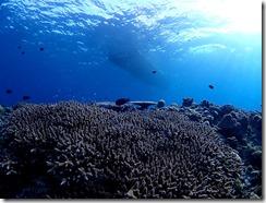 okinawa kerama diving856