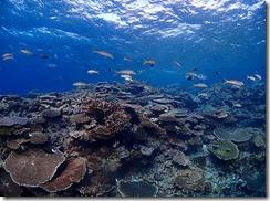okinawa kerama diving857