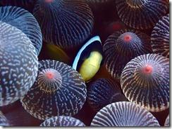 okinawa kerama diving858