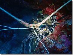 okinawa kerama diving859