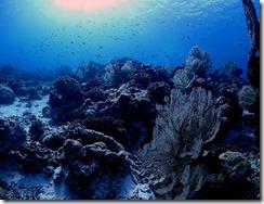 okinawa kerama diving860