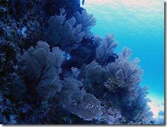 okinawa kerama diving861