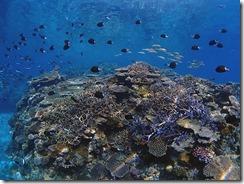 okinawa kerama diving866