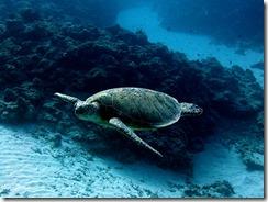 okinawa kerama diving869