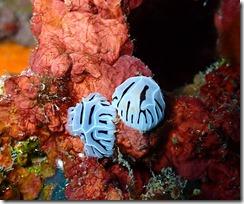 okinawa kerama diving878