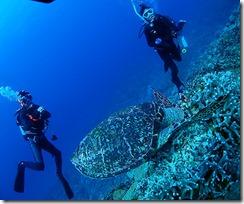 okinawa kerama diving886
