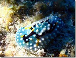okinawa kerama diving896