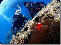 okinawa kerama diving897