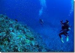 okinawa kerama diving912