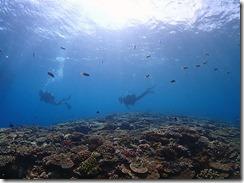 okinawa kerama diving916